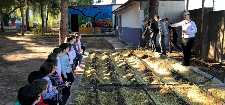 Los alumnos del programa ADINCRE ayudan a plantar y proteger el huerto