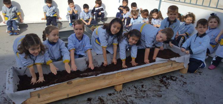 Los alumnos de infantil recogen su primera cosecha en el huerto escolar