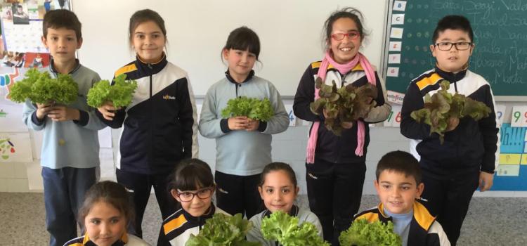 Los alumnos de Primaria recogen la primera cosecha del huerto escolar