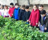 Nueva cosecha en el huerto escolar