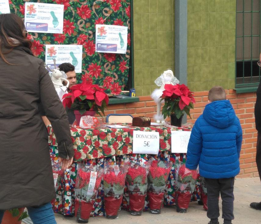 El lunes se inicia la venta de Flores de Pascua en la Escuela Profesional