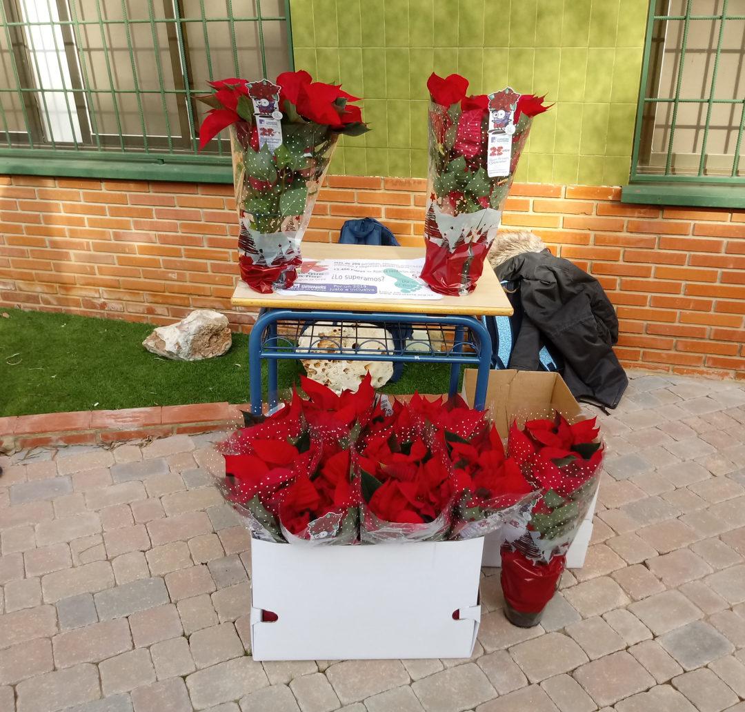 ¡No te quedes sin tu flor de Pascua de la Fundación Novaterra!