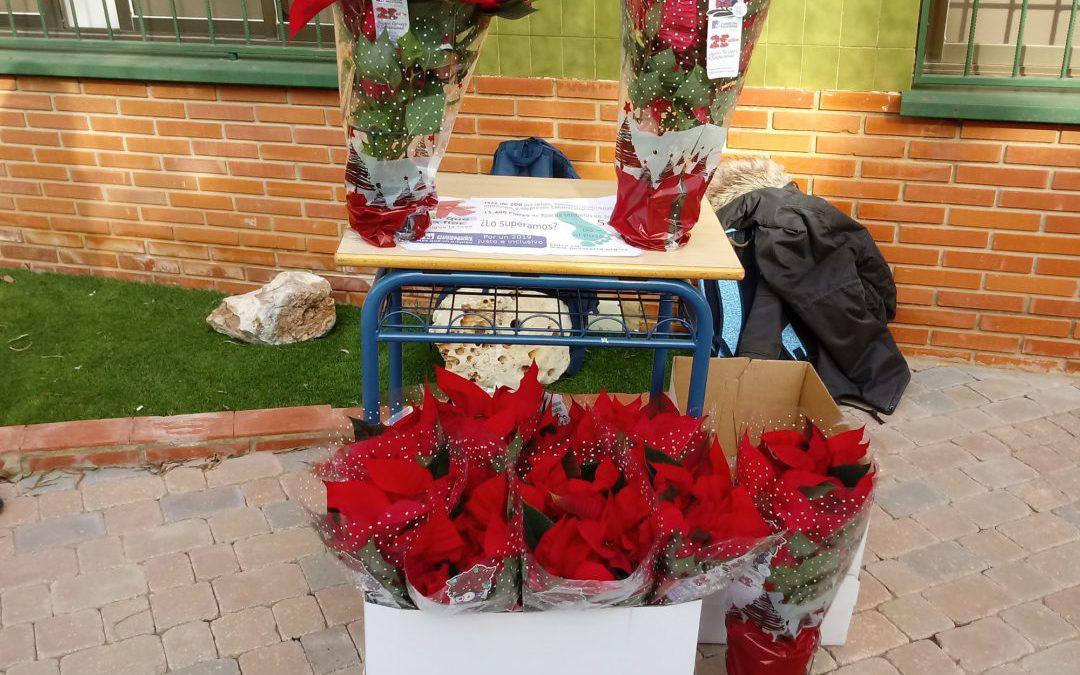 ¡Haz tu reserva online de la Flor de Pascua de la Fundación Novaterra!